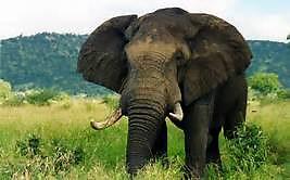 1 éléphant.jpg