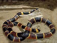2 serpent.jpg