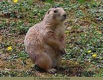 3 marmotte.jpg